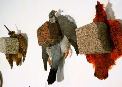 Près de la mare, 180x180cm, 7 dépouilles d'oiseaux + pavés