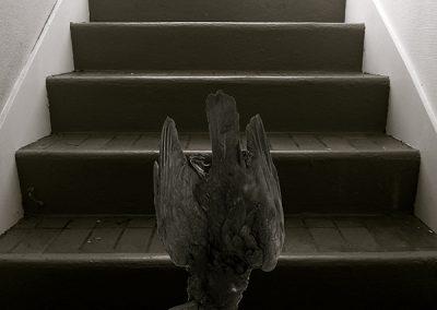 Grand corbeau chutant dans l'escalier, photo éditée à 7 exemplaires, Digigraphie Epson, RLD, 2011